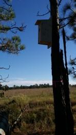 North Carolina nest box (photo credit: Anjolene Hunt)