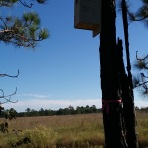 North Carolina nest box (photo credit: Anjolene Hunt)