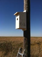 Kansas nest box (photo credit: Casey Pozzanghera)