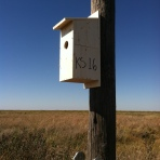Kansas nest box (photo credit: Casey Pozzanghera)