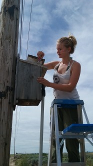 Boise State University biologist Anjolene Hunt opens an Idaho nest box