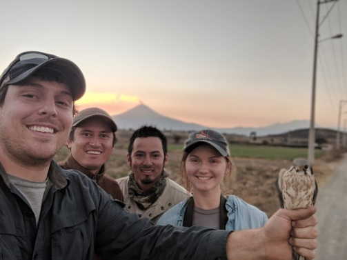 The crew captures a kestrel at sunset in view of Popocatépetl (an active volcano in Puebla)