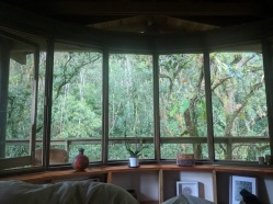 Our air B&B in Coatepec offered beautiful views of lush rainforest