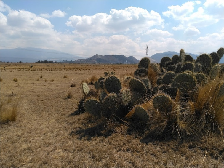 Cacti were the main form of vegetation we encountered in the dry Puebla state