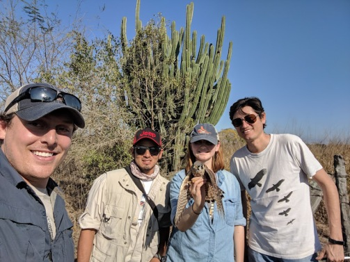 Our team captures our first American Kestrel of the trip! (from left to right: Jesse Watson, Dayan Espinosa, Anjolene Hunt, Kashmir Wolf)