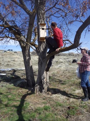 treeclimbox